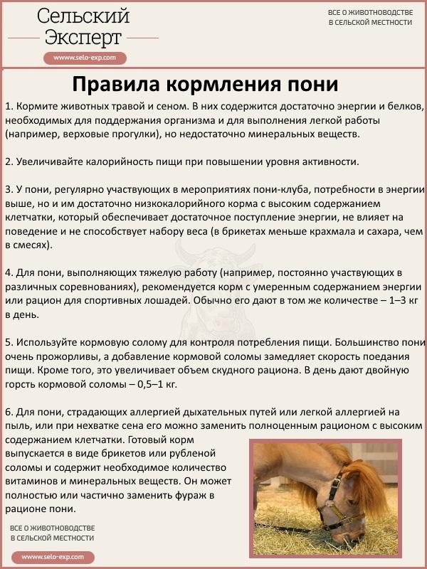 Правила кормления пони