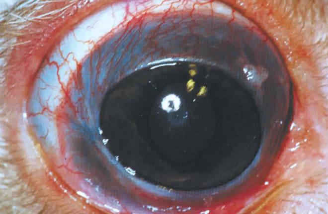 При уевите на поверхности глаза появляется заметная сосудистая сетка