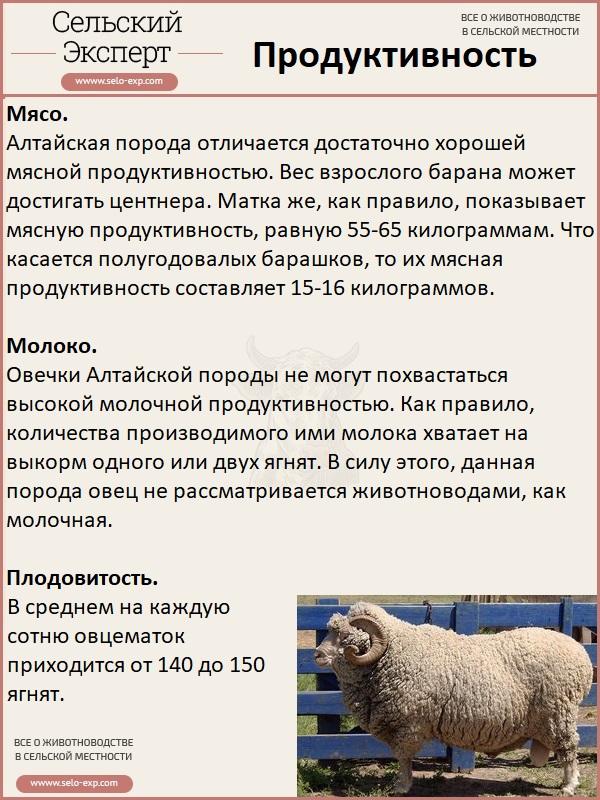 Продуктивность алтайской породы овец