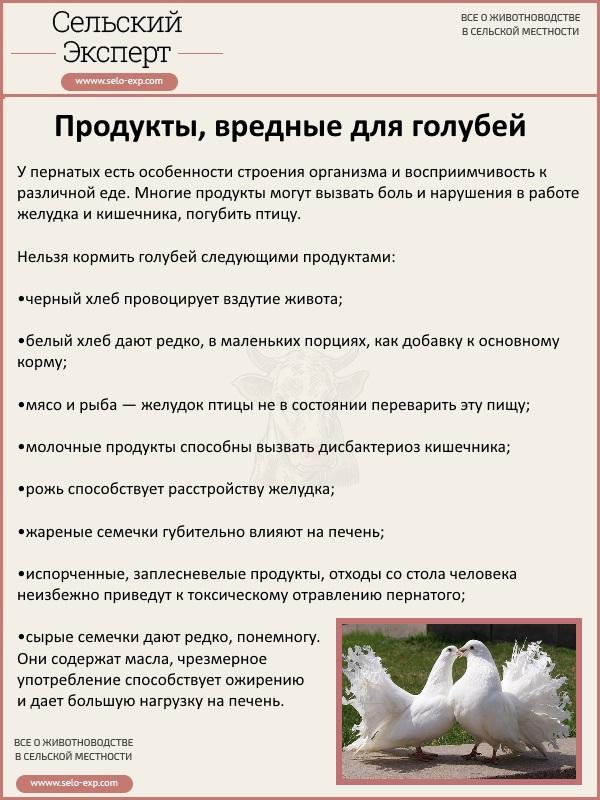 Продукты, вредные для голубей