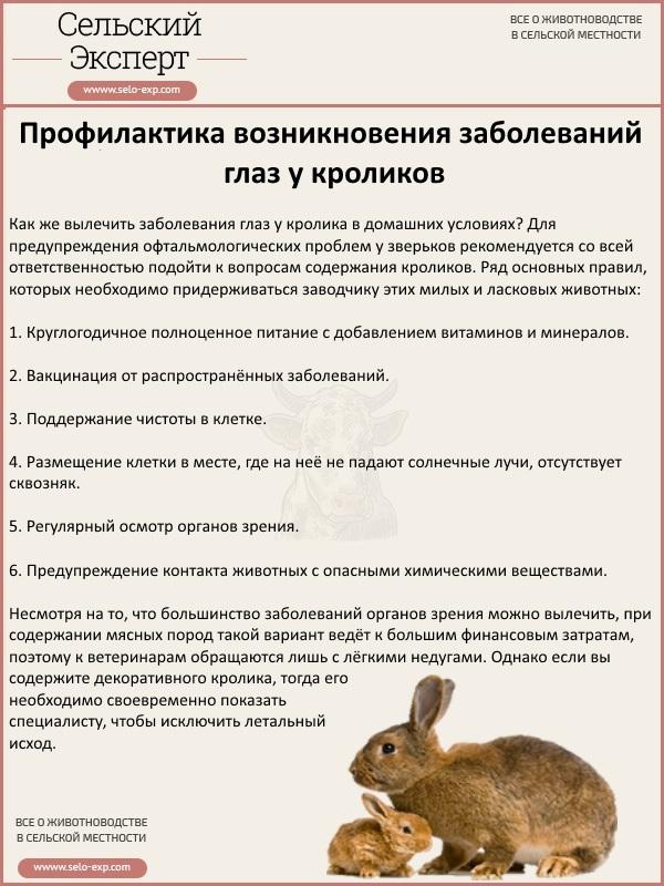 Профилактика возникновения заболеваний глаз у кролика