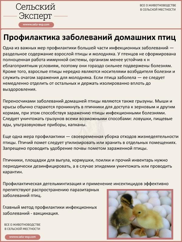 Профилактика заболеваний домашних птиц