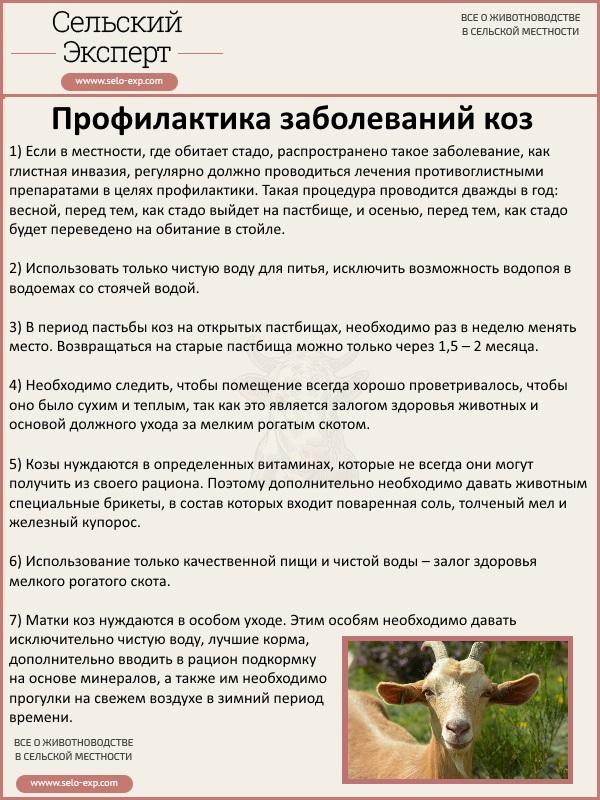 Профилактика заболеваний коз