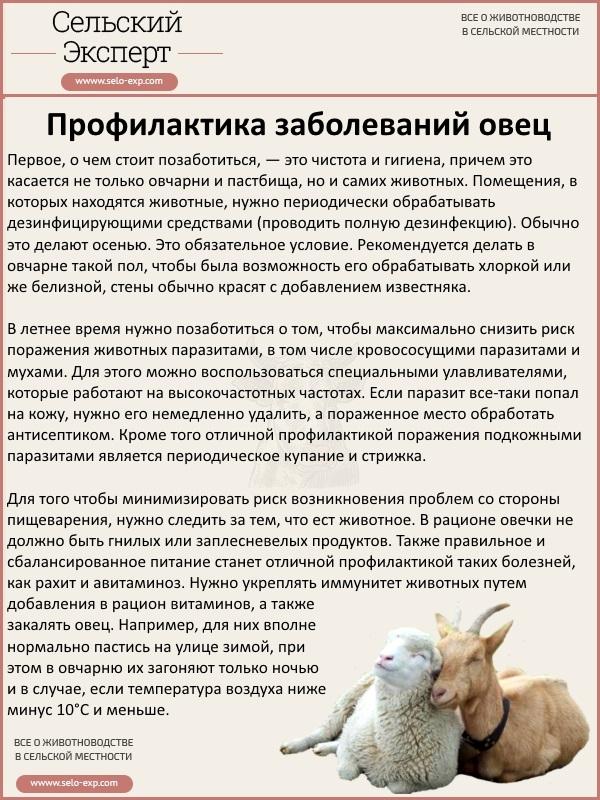 Профилактика заболеваний овец