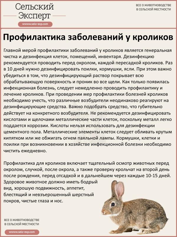 Профилактика заболеваний у кроликов