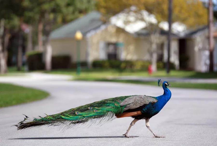 Птицы умеют быстро убегать от хищников