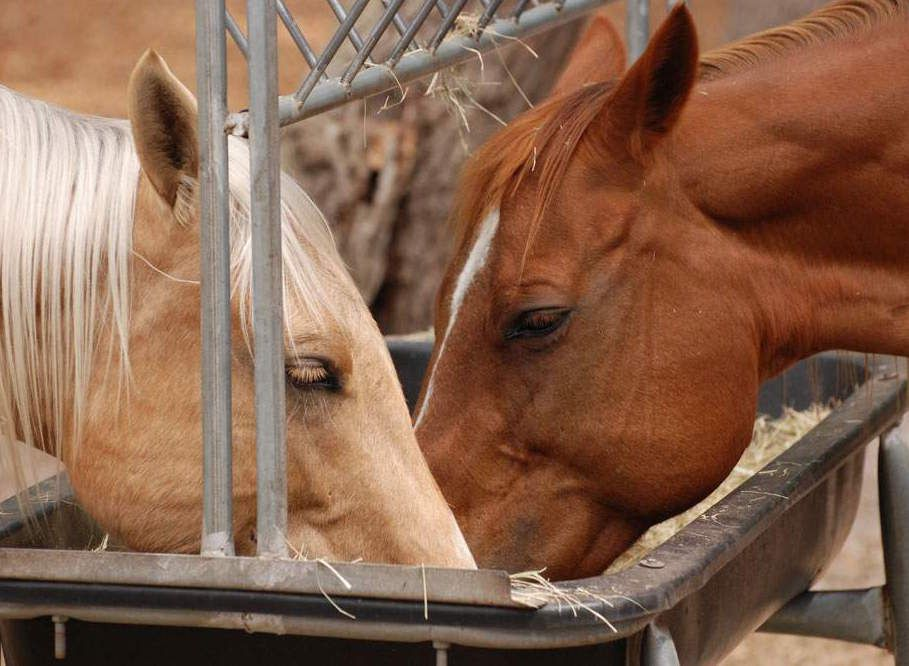 Рацион для каждой лошади составляется индивидуально