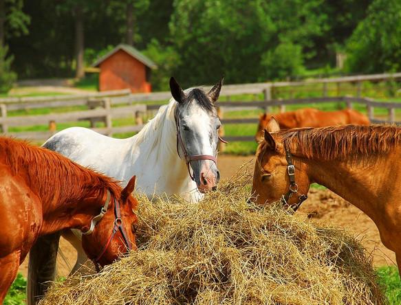 Рацион питания лошади должен быть сбалансирован