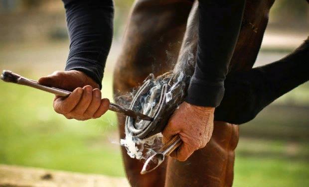 Рекомендуется каждый день осматривать состояние копыт лошади, удалять специальным инструментом различные загрязнения
