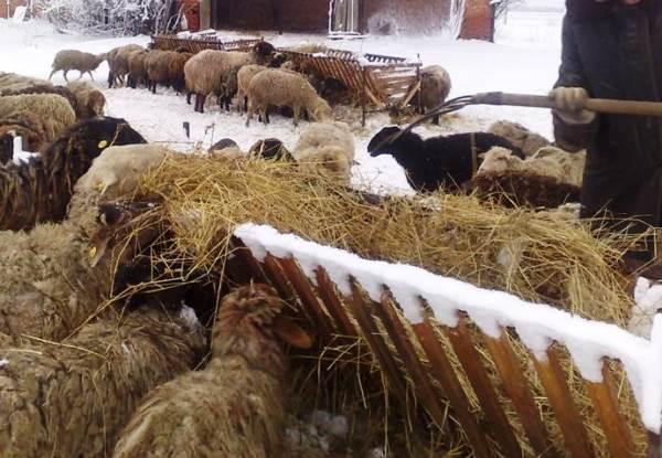 Сено - основной рацион на стойловом содержании зимой