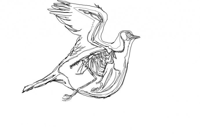 Какой клюв у голубя