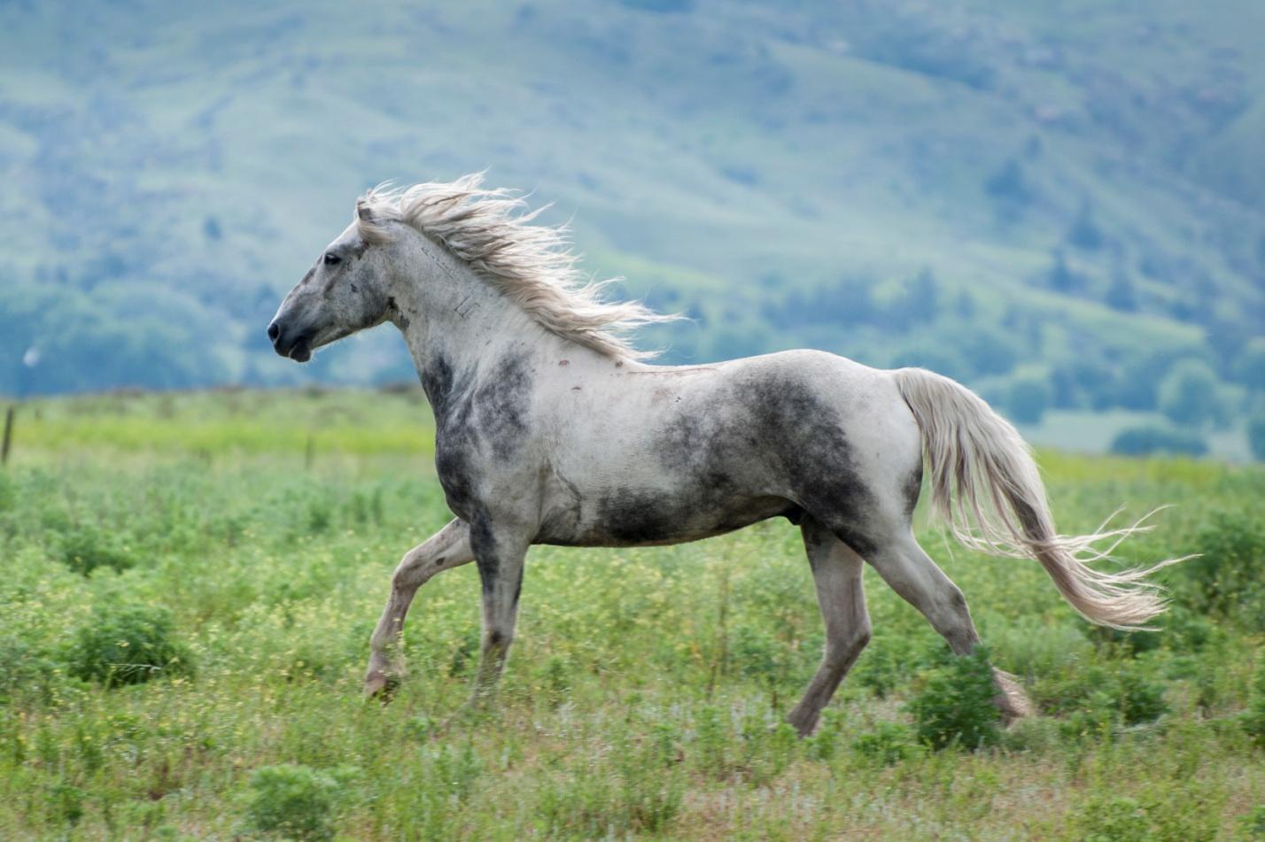 Скорость лошадей в основном зависит от породы