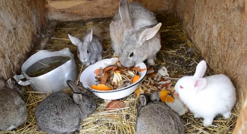 Скученность в крольчатнике — дополнительный фактор риска
