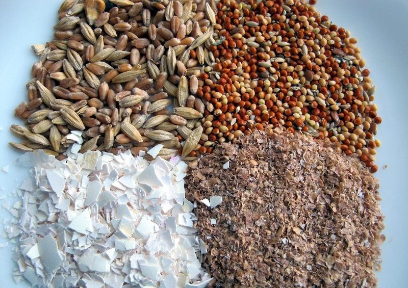 Смеси для питания пернатых должны быть питательными и полезными
