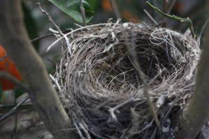 Создание гнезда
