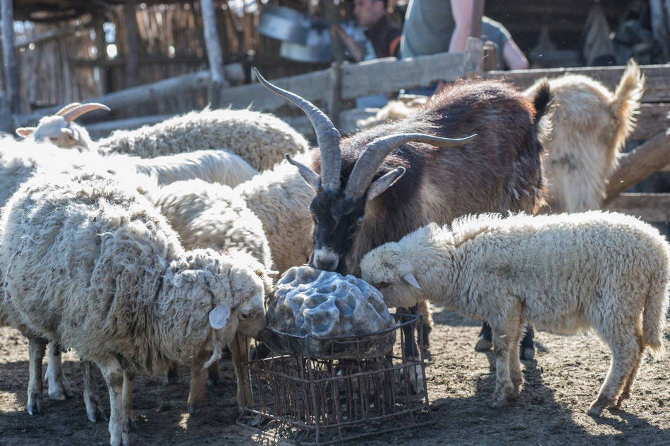 Солевой камень в загоне с животными