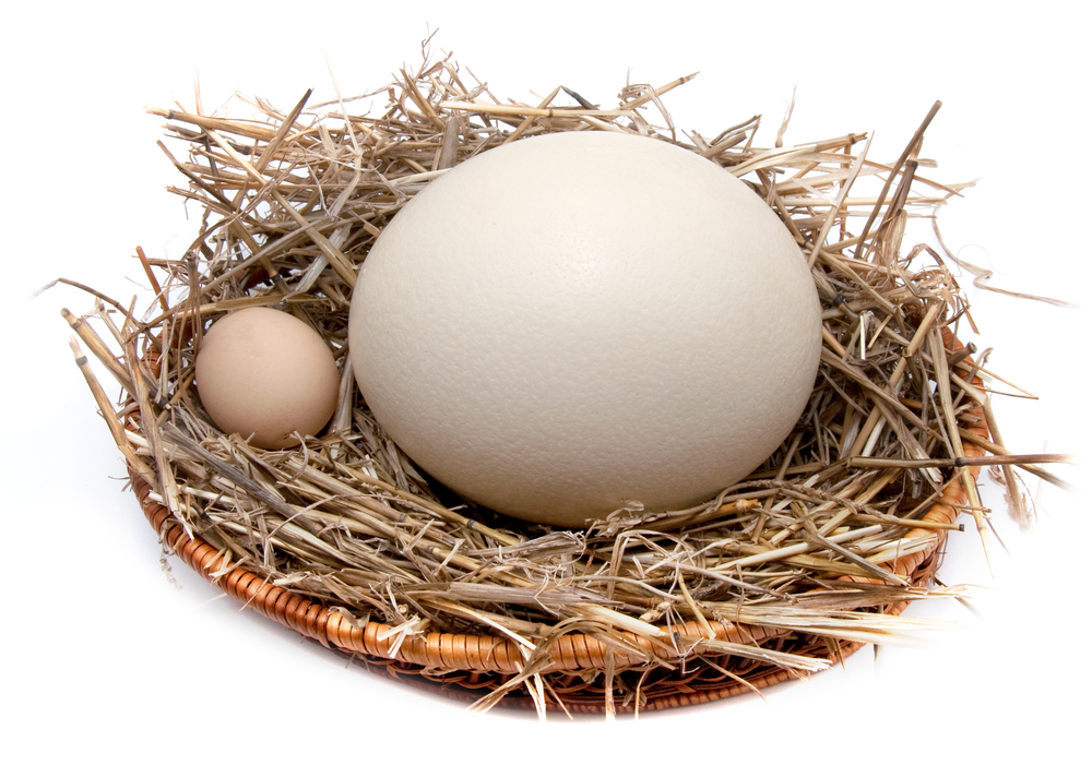Страусиное яйцо намного больше куриного