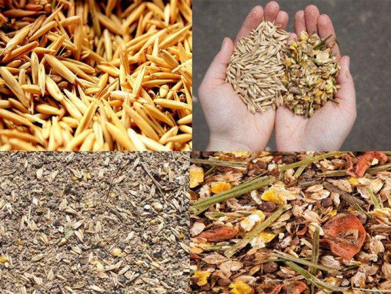 Существует много видов сухого корма