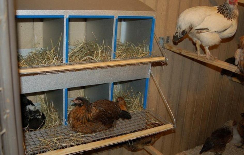 Так выглядит правильное обустройство мест гнездования