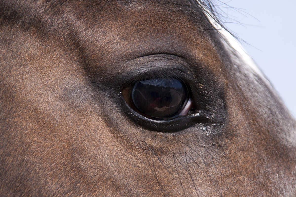 У здорового коня ясные глаза с блеском