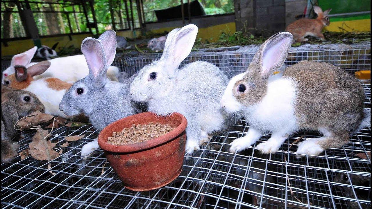 Комбикорм для взрослых кроликов
