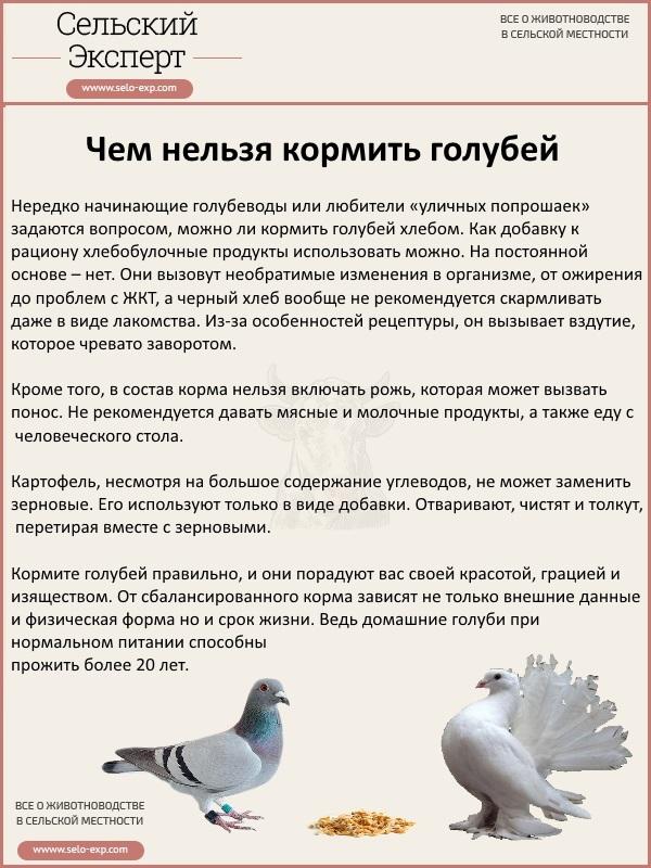 Чем нельзя кормить голубей