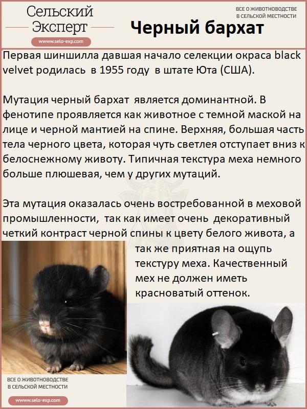 Черный бархат