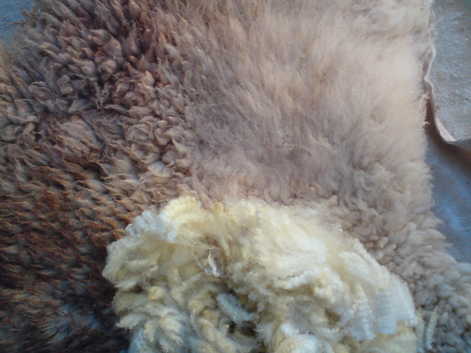Шкуру барана снимают, консервируют, после чего выделывают и используют в промышленности