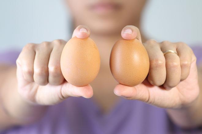 Яйца, полученные без участия петуха, не годятся для высиживания