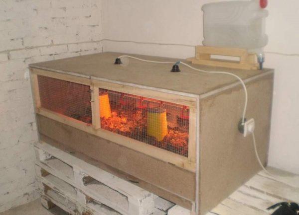 В брудере легко поддерживать температуру