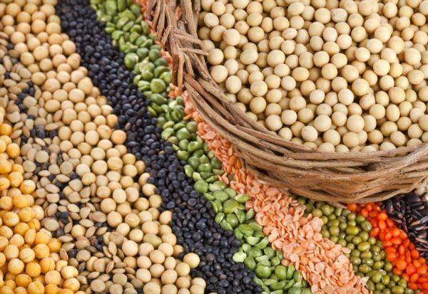 Зерновые и бобовые – основа комбикорма