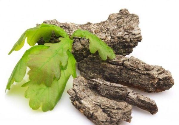 Кора дуба — одно из самых действенных народных лекарств при поносе