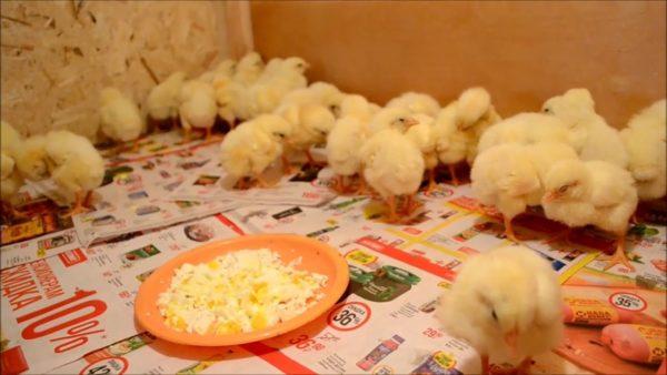 Малышам полезна смесь рубленого яйца и творога
