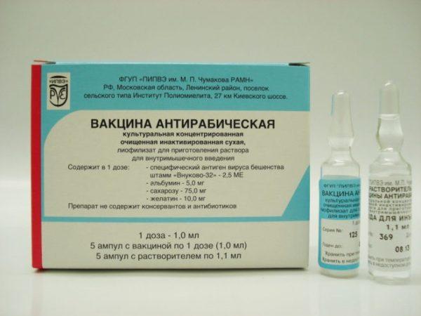 Не забудьте пройти курс прививок против бешенства