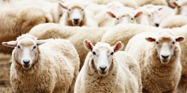 Разведение животных как бизнес