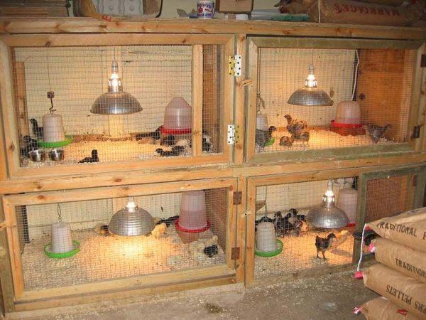 Организация птичника