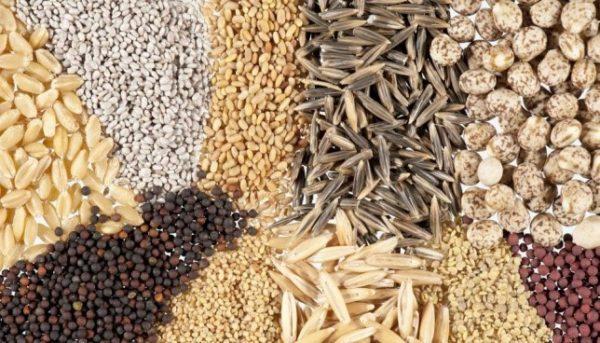 От качественного состава корма зависит не только здоровье, но и продуктивность падуанов