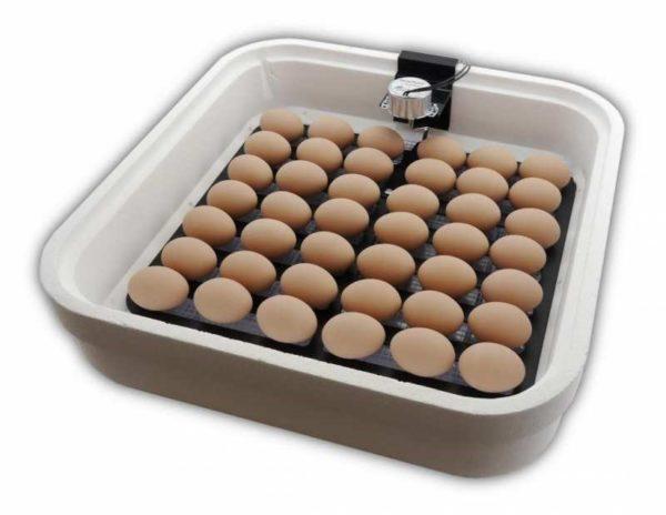 Использование инкубатора для вылупления цыплят