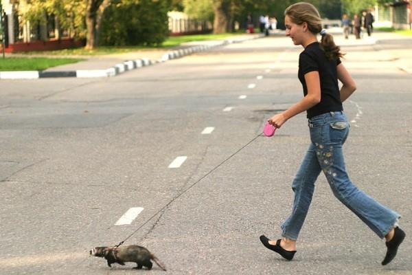 Любознательные зверьки любят гулять на природе