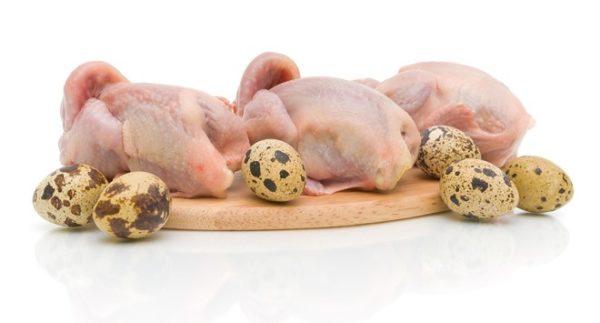 Мясо откормленного цыпленка получается нежным и сочным