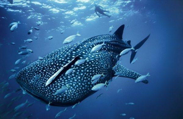 Рыба - это млекопитающее или нет?