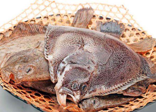Рыба морской фазан