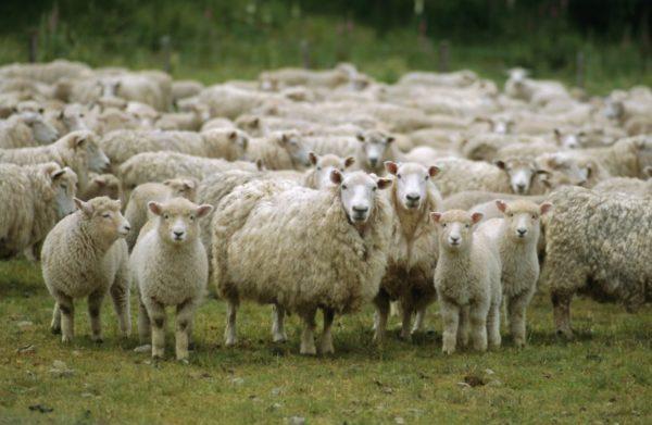 Животные устойчивы к холодам, но плохо переносят зной