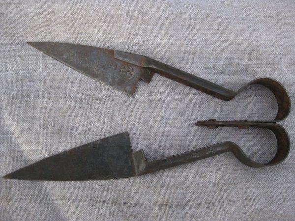 Животных стригут специальными ножницами или машинками
