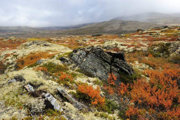 Холодный климат тундры по душе казаркам