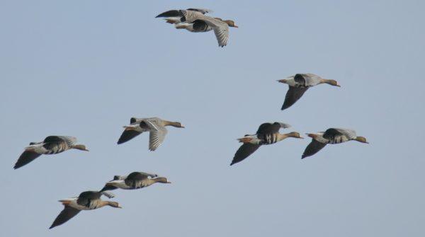 Охота на птиц с приманкой – одно удовольствие