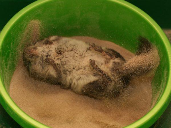 Не забывайте понемногу добавлять свежего песка