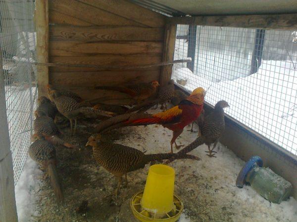 Содержание птиц зимой