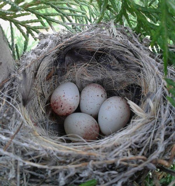 Заготовка материалов для гнезда