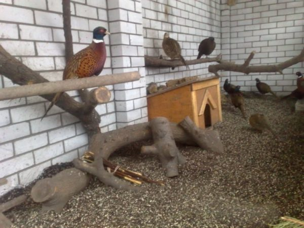 Пример насеста для фазанов
